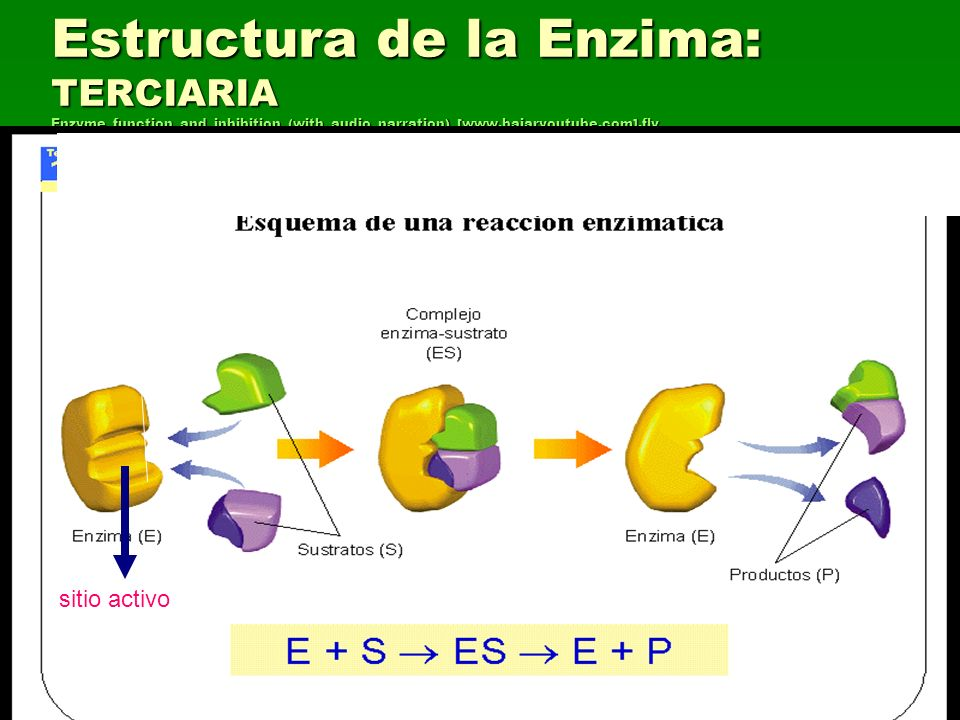 Estructura de la Enzima: TERCIARIA Enzyme_function_and_inhibition_(with_audio_narration)_[www.bajaryoutube.com].flv